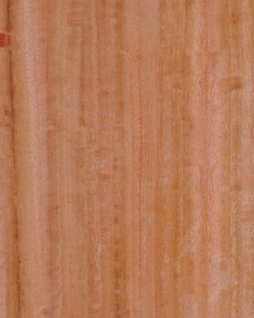 Eucalyptus-819x1024